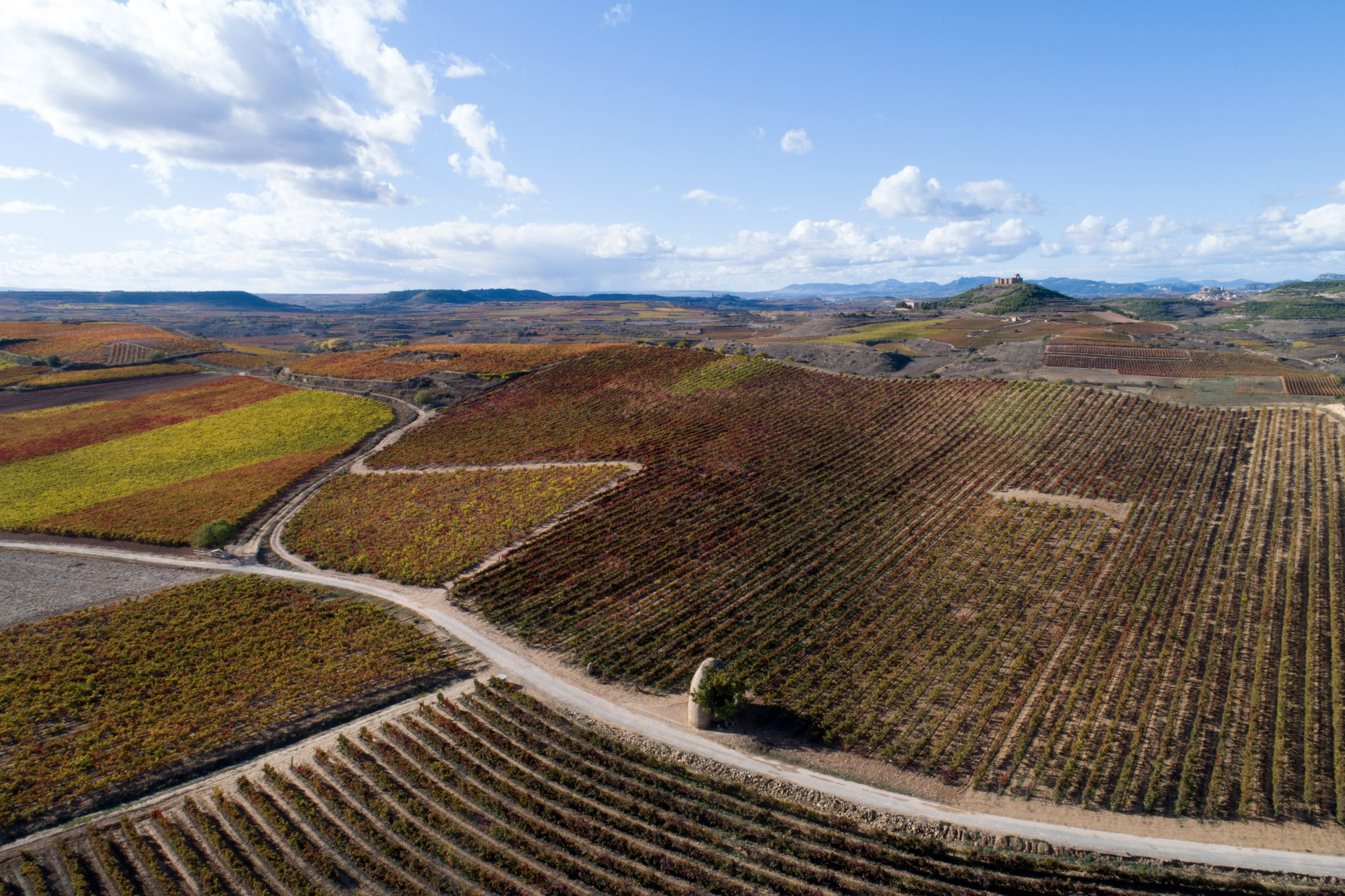 Aerial photo vineyards La Rioja