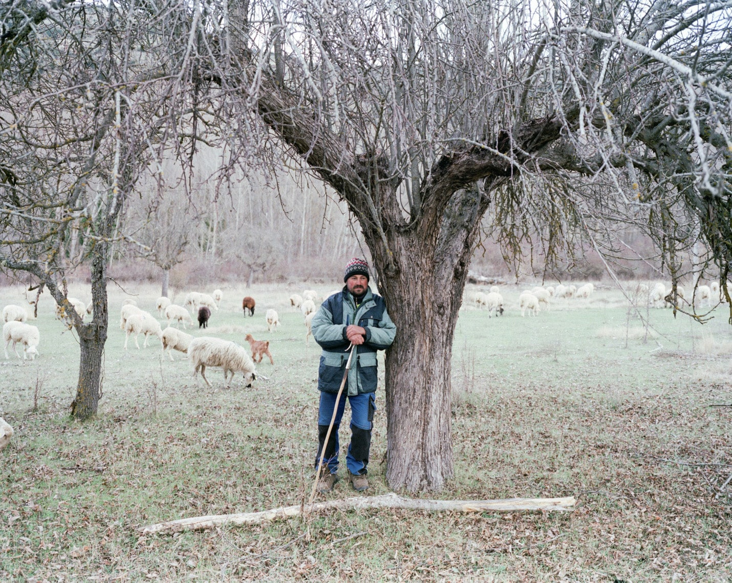 Mihai and the sheep