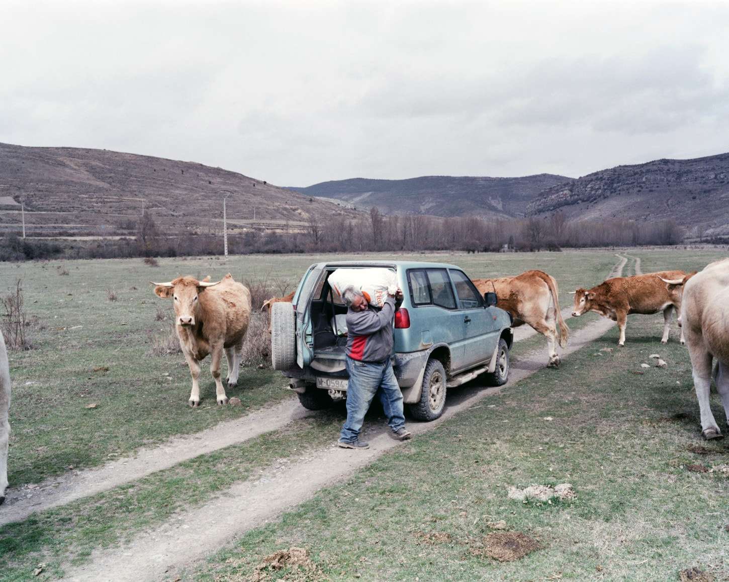 Jose Mari and his cows